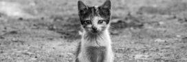 Stérilisation de chats errants: 30 Millions d'amis appelle à suivre l'exemple belge