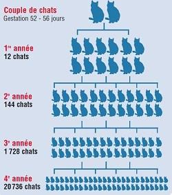 stérilisation chats, belgique