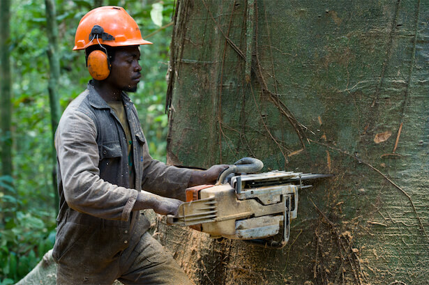 déforestation, greenpeace