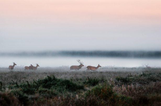 migration animaux