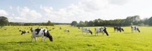 Un nouvel outil pour mesurer le bien-être des bovins