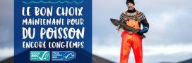 Semaine de la pêche responsable: agir maintenant pour du poisson encore longtemps