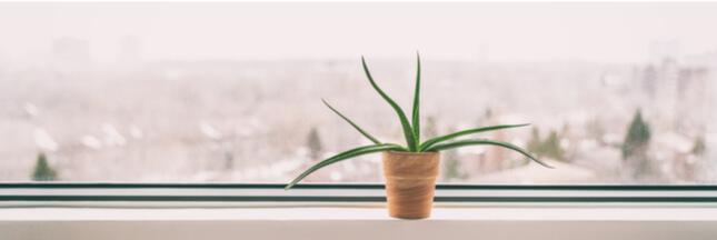 plante d'intérieur en février