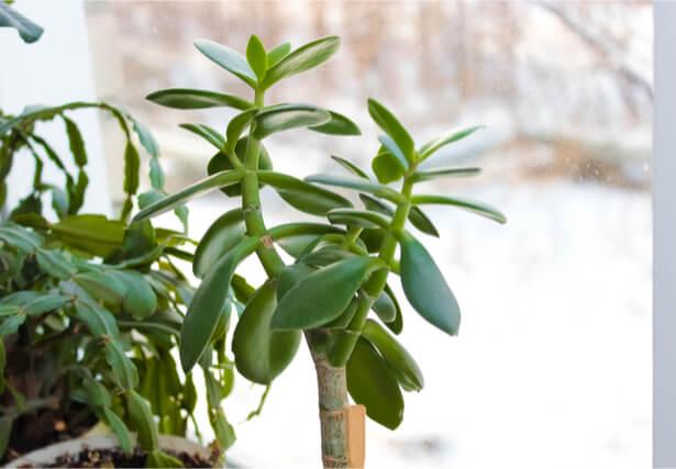 plantes intérieur en février