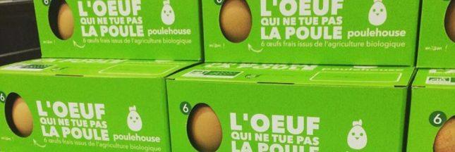 Une start-up commercialise les oeufs de 'vieilles' poules pour leur éviter l'abattoir
