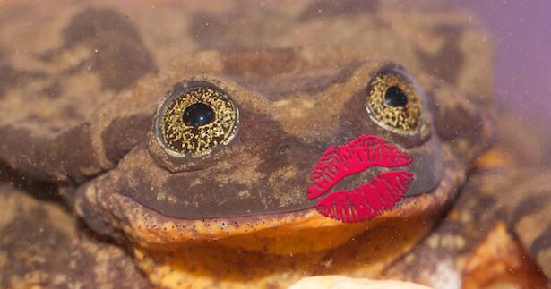 romeo grenouille