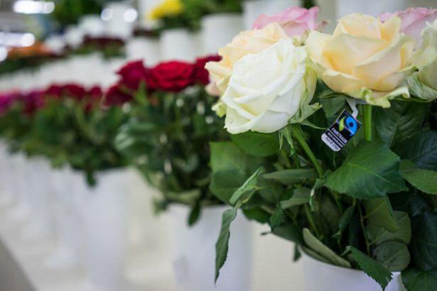 roses équitables