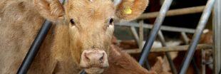 Des OGM interdits retrouvés dans des aliments pour animaux