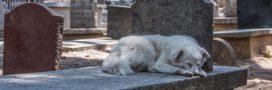 Quel avenir pour un animal de compagnie après le décès de son maître?