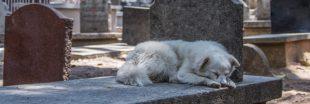 Quel avenir pour un animal de compagnie après le décès de son maître ?