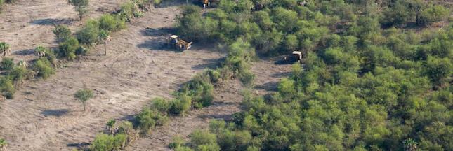Nos importations de soja responsables de la déforestation en Amérique Latine