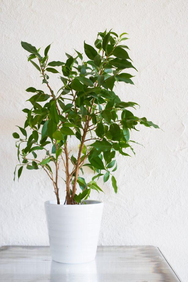 Les plantes d 39 int rieur qui r sistent ceux qui n 39 ont pas la main verte - Giftige zimmerpflanzen ...