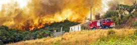Pour éviter les incendies les portugais doivent couper les arbres devant chez eux… rapidement!