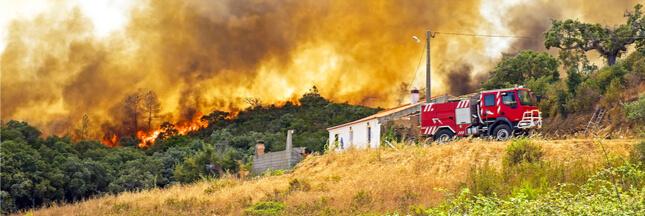 Pour éviter les incendies les portugais doivent couper les arbres devant chez eux... rapidement !