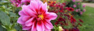 Les fleurs aussi ont leurs labels !