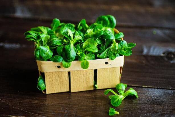 cuisine panier de légumes mars