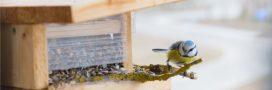 Nourrir les oiseaux sauvages: une pratique qui peut être dangereuse pour leur santé?