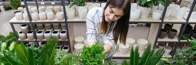 Comment bien choisir une plante en pot?