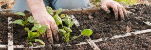 Jardinage - En mars, plantez votre potager en carrés