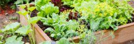 Potagers urbains: quelques conseils pour récolter des légumes moins pollués