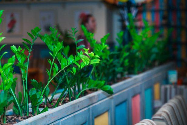 plantes intérieur résistantes