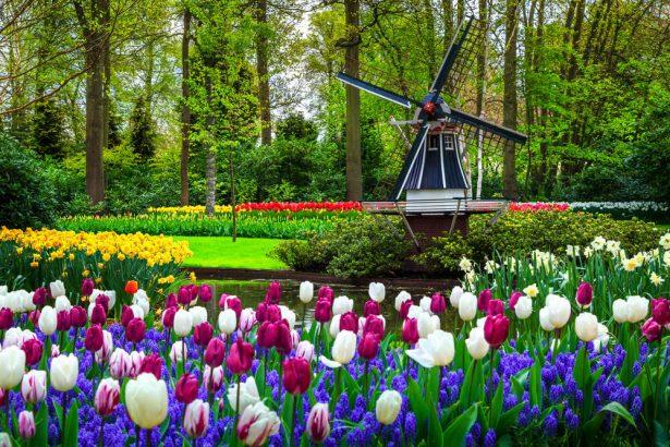 destinations florales