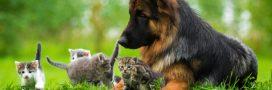 Le Code du bien-être animal remis à jour en Wallonie