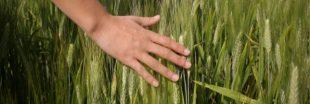 Règles pour l'alimentation bio : fini le diktat des firmes sur les semences paysannes !