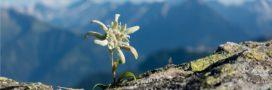 Réchauffement climatique: de nouvelles plantes fleurissent sur les cimes