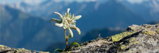 Réchauffement climatique : de nouvelles plantes fleurissent sur les cimes