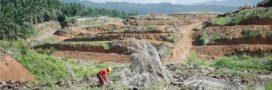 Importer encore plus d'huile de palme pour ne surtout pas nuire aux intérêts de Total et Dassault