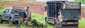 Iceland, le 'Picard' anglais renonce à l'huile de palme