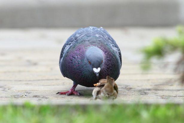 oiseaux ville