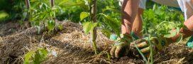 La permaculture au quotidien: la vie comme un écosystème