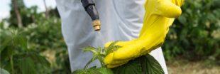 France : un nouveau plan pour réduire l'utilisation de pesticides