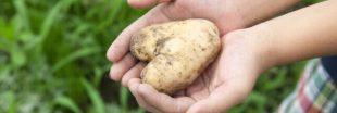 Jardinage à faire en avril : planter des pommes de terre