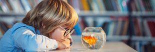 Pourquoi détenir un poisson rouge dans un bocal est inhumain