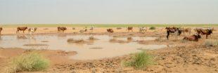 Le Sahara s'avance toujours plus loin et plus vite
