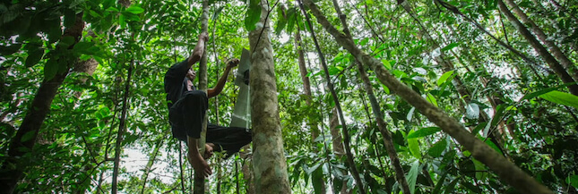 Rainforest Connection : des téléphones dans les arbres pour lutter contre la déforestation