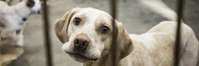 La SPA lance Toudou, sa plateforme participative pour le bien-être animal