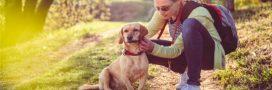 Sondage – Que faites-vous pour protéger vos animaux des parasites?