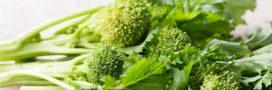 Le 'cima di rapa' ou brocoli-rave, un légume ancien qui a du piquant
