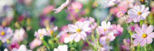 Coup de coeur : la fête des plantes et de leurs parfums de Bagnoles de l'Orne