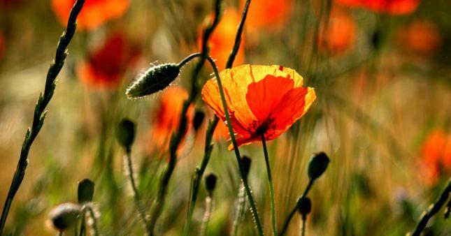 Journée internationale de la biodiversité: en mai, fêtez la nature!