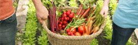 'Let's Food Cities': promouvoir une agriculture urbaine locale, saine et durable