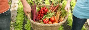 'Let's Food Cities' : promouvoir une agriculture urbaine locale, saine et durable