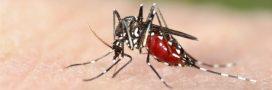 Véritable aspirateur à moustiques tigres, Qista: l'alternative à l'épandage chimique