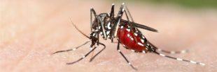 Véritable aspirateur à moustiques tigres, Qista : l'alternative à l'épandage chimique