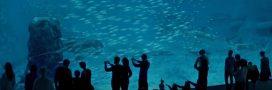 Nausicaá: portrait des animaux du plus grand aquarium d'Europe
