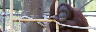 Le triste sort des animaux en Indonésie dénoncé par World Animal Protection